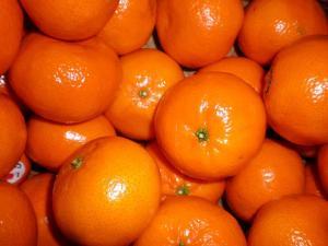 """ProCitrus: """"El mercado nacional de mandarina lo vemos con mucha cautela"""""""