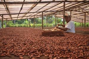 Procompite: S/ 1.224 millones para financiar proyectos productivos en regiones este año