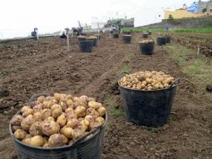 Producción agropecuaria creció 0.57 % en abril de este año