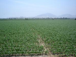 PRODUCCIÓN AGROPECUARIA CRECIÓ 1,55% EN SEPTIEMBRE Y 3,93% EN 2011
