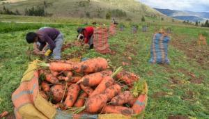 Producción agropecuaria fue el único sector que no creció en la primera mitad del 2021