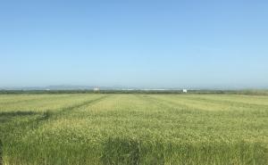 Producción mundial de arroz caerá 1% en la campaña 2019/2020