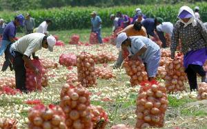 Producción Nacional Agropecuaria creció 2.2% en el primer cuatrimestre del año