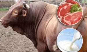 Producción nacional de carne bovina creció 2.2% en 2019