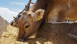 Producción pecuaria y la proteína animal son esenciales para los sistemas agrícolas y las comunidades rurales en las Américas