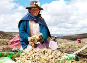 Produce brindará asistencia a productores de maca