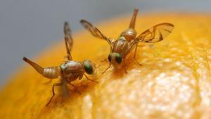 Productores de Casa Grande se suman al compromiso por erradicar la mosca de la fruta