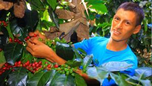 Productores de Huánuco venden más de 32 toneladas de café a Estados Unidos
