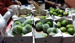 Productores de Huarochirí exportan 1.600 kilos de chirimoya a Hong kong y Canadá