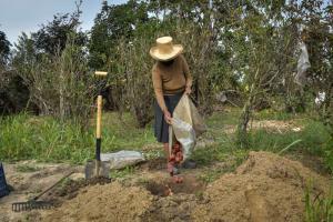 Productores del valle de Chicama intensifican acciones para producir frutos libres de mosca de la fruta