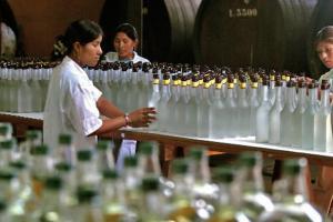Productores piden al gobierno autorización para comercializar pisco