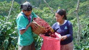 Proyecto de ley agraria acelera liquidación de pequeña y mediana agricultura