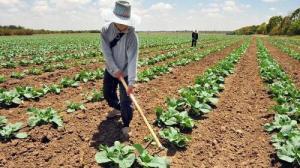Proyecto de Presupuesto del 2022 para el sector agropecuario ascendería a S/ 6.161 millones