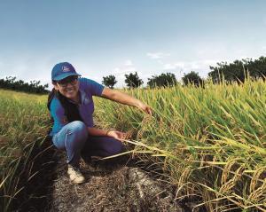 ¿Qué rol desempeña el nitrógeno en el desarrollo vegetativo del arroz?