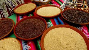 Quinua peruana se alista a llegar al mercado chino en 2019