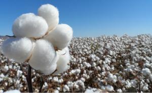 Reconocen la necesidad de crear un foro de dialogo latinoamericano para el sector algodonero