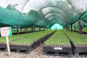Reforestan 49.453 hectáreas dañadas por cultivos ilegales de coca entre el 2011 y 2017
