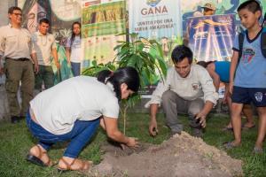 Reforestan la ciudad de Iquitos con árboles nativos de la Amazonía