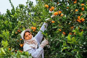 S/ 35 millones para el cofinanciamiento de Proyectos de Reconversión Productiva Agropecuaria este año
