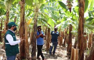 San Martín: certifican predios en Buenas Prácticas Agrícolas que producirán alimentos sanos e inocuos