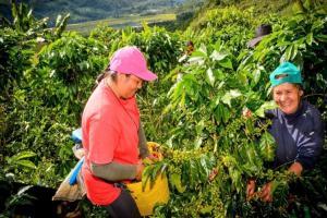 San Martín impulsa 28 proyectos productivos agrarios