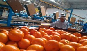 San Miguel incrementó envíos de distintos tipos de fruta fresca proveniente de Argentina, Uruguay y Perú en 2020
