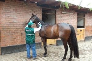 Sanidad de 141 caballos de competencia está asegurada