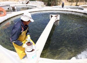 Sanipes elabora protocolo sanitario para prevenir enfermedades en los peces