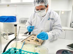 Sanipes reafirma continuidad en estudios de enfermedades que afecten a la trucha en el sur del país