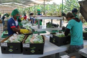 Se viene el VII Congreso Internacional de Banano Orgánico