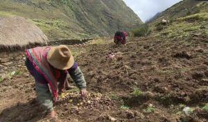 Sector agricultura tendrá el 3.2% del presupuesto total del próximo año