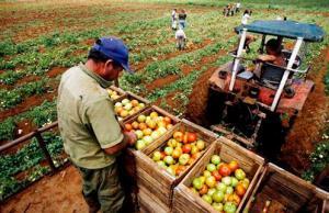 Sector Agropecuario creció 3.2% en 2019