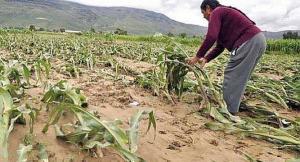 Seguro Agrario Catastrófico en campaña 2018/2019 indemnizó con S/ 23 millones a 329.633 agricultores