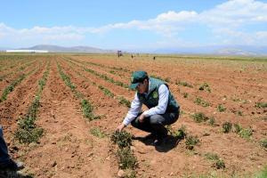 Seguro agrícola comercial mejorado estaría listo en abril