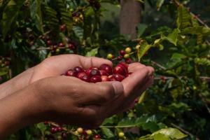 Seis tips para hacer más rentable la producción de café