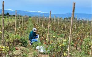 Senasa analiza alimentos agropecuarios para determinar condición sanitaria en San Martín
