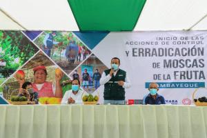 Senasa busca erradicar a la mosca de la fruta en más de 30 mil hectáreas hortofrutícolas de Lambayeque