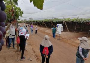 Senasa capacita a pequeños y medianos productores para el control integrado de Moscas de la Fruta