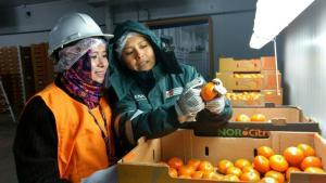 Senasa certificó más 90 mil toneladas de cítricos en la región Ica