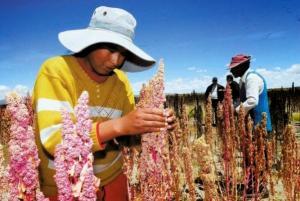 Senasa culminará acuerdo fitosanitario para ingreso de la quinua a China en el 2018