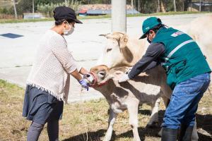 Senasa emprende acciones inmediatas para proteger a la ganadería familiar en Cajamarca