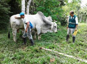 Senasa fortalecerá capacidades de más de 200 productores lecheros de Cusco