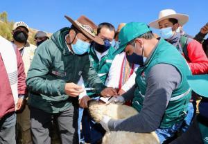 Senasa inicia segunda etapa de vacunación de animales de abastos