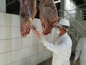 Senasa promueve implementación de mataderos municipales en Arequipa