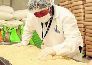 Senasa Puno certificó 988 toneladas de quinua para exportación