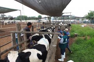 Senasa refuerza acciones de prevención y control de Tuberculosis y Brucelosis bovina