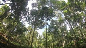 Serfor: Programa de Financiamiento para Plantaciones Forestales generará más de 30 mil puestos de trabajo