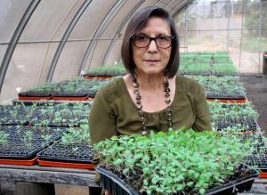 Siembra de granos nativos en extensiones mayores y nuevas mostró los problemas que afectan el desarrollo de estos cultivos