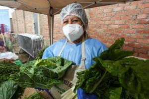 Siembras y cosechas en el campo garantizan normal abastecimiento de alimentos