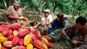 Sierra y Selva Exportadora generó más de 214 mil empleos permanentes